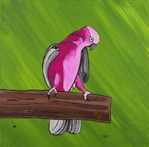 Jason Japaljarri Woods Birds that live around Yuendumu
